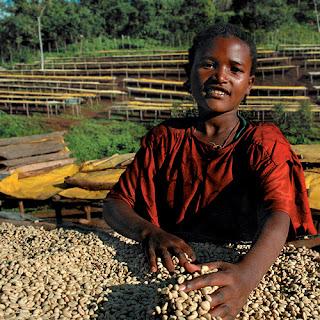 On the Ethiopia farm – Kochere Cooperative