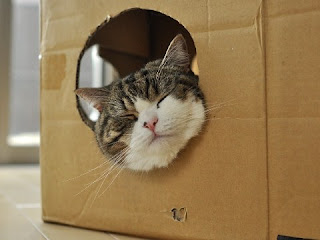 紙箱貓 小圓