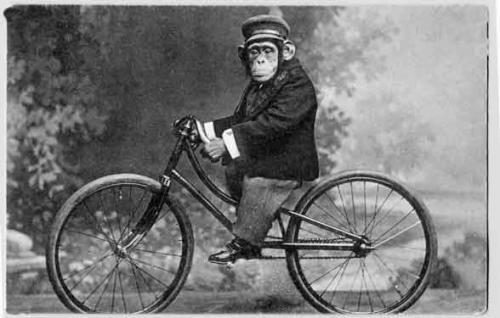 scimmia%2Bsulla%2Bbici.jpg