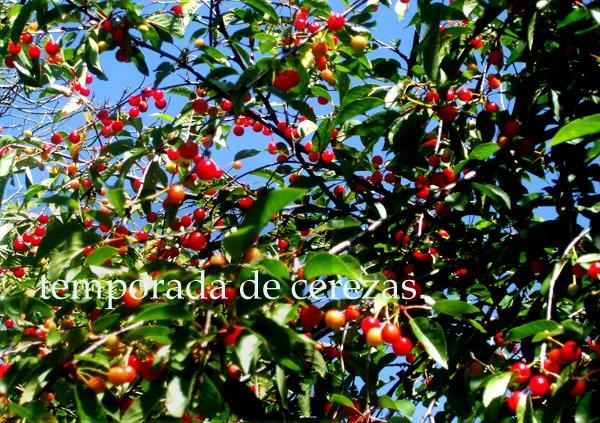 Temporada de cerezas.