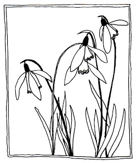 snowdrop drawing