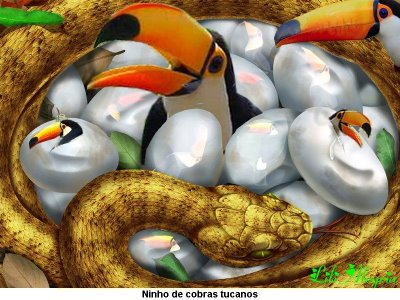 http://4.bp.blogspot.com/_OUJXhhgUDVc/TO7sre9T92I/AAAAAAAAABs/IhYJNzriZvE/s1600/Ninho+de+cobras+tucanos.jpg