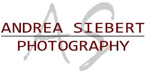Andrea Siebert Photography