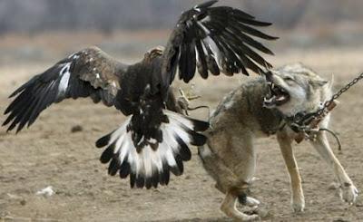 птенец орла фото