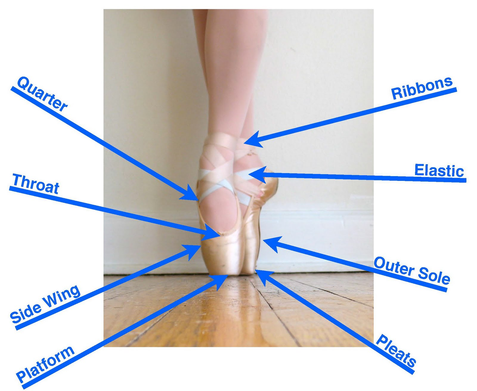 Pointe Shoe Anatomy | Ballet For Me And You