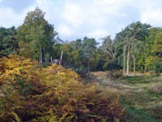 West Wickham Common