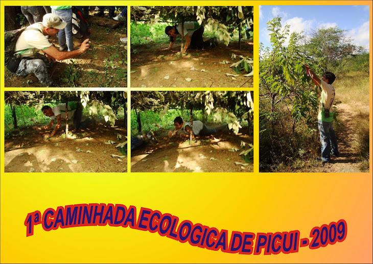 1ª CAMINHADA ECOLOGICA DE PICUI - 26/07/2009