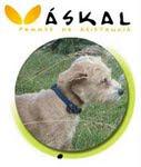 Perros para personas sordas