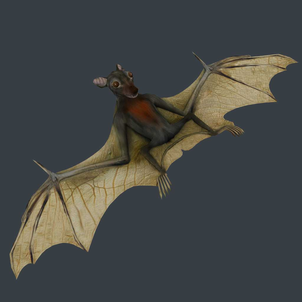 One Couple S Adventure In Africa The Fruit Bats Are Here
