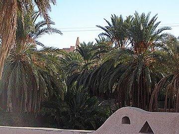 Alžir Palme