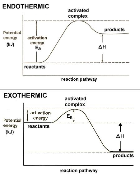exothermic reactions Endothermic and exothermic reactions and processes are a common topic in chemistry class this activity provides examples that can be done with household materials.