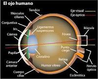 Partes del ojo y los ojos rojos en medicina natural