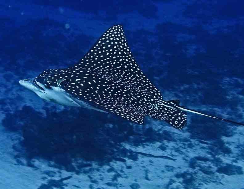 Animals, Birds, Creatures | Wild Life & Sea Side: Deadly ...