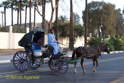 Edfu temple in Egypt - taking a horse carriage from the cruise to the temple