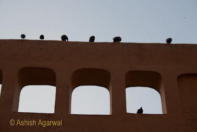 Pigeons on the walls and windows inside the Amer Fort in Jaipur