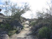 Desert Pathways