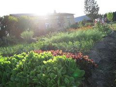 Vårt grönsaksland