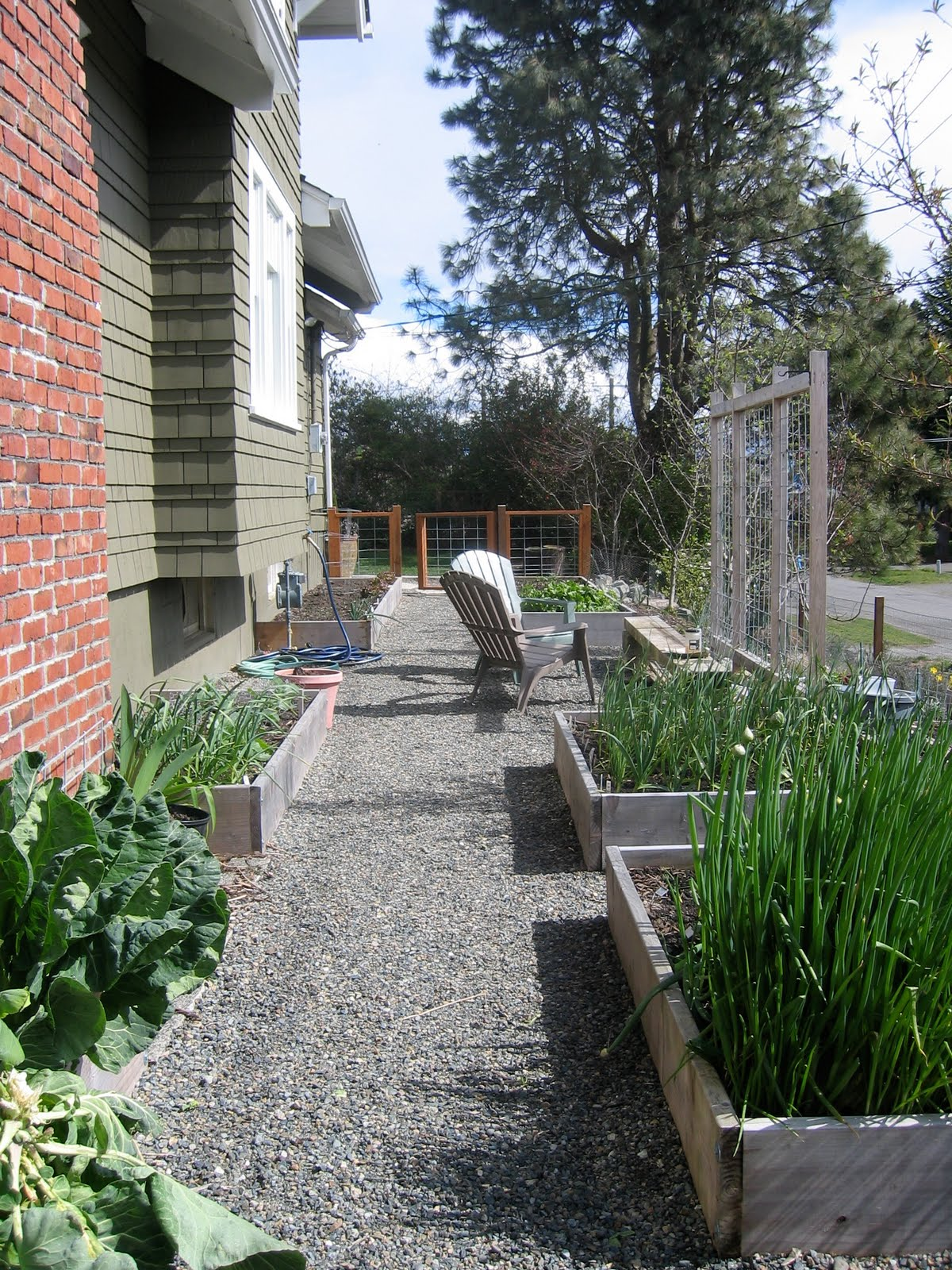 Our Kitchen Garden The Tacoma Kitchen Garden Journal Our Kitchen Garden An Early