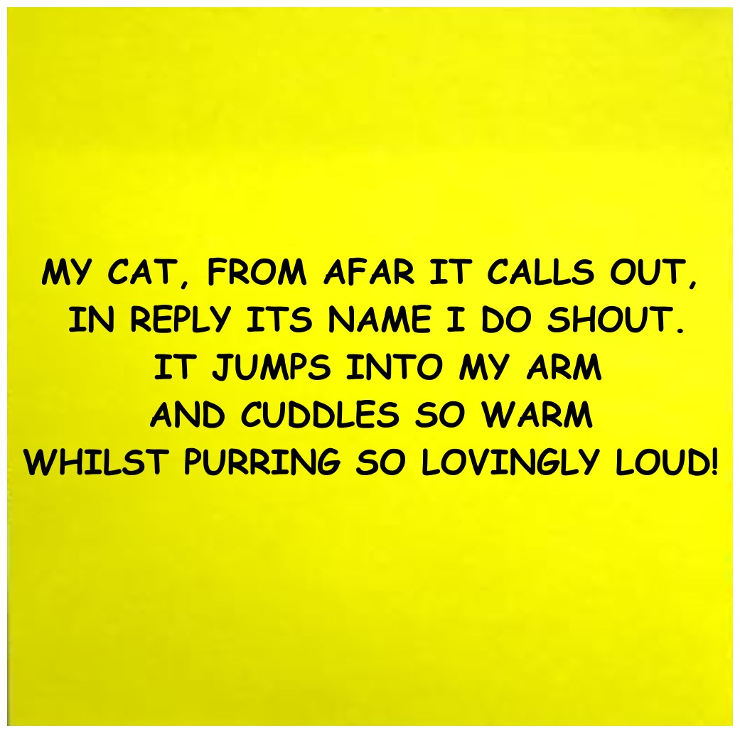 cat limerick