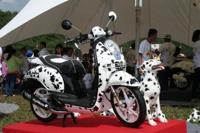 MODIFIKASI HONDA SCOOPY Dalmatian