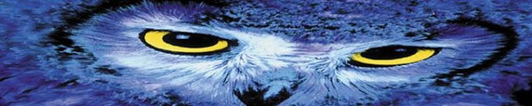 Baykuş Irkı