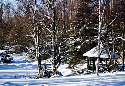 Anchorage Pond in Winter