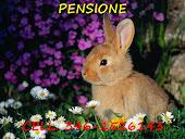 Pensione Coniglietti Nani
