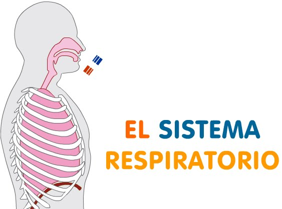 BIO Tic@: Repasa el Sistema Respiratorio
