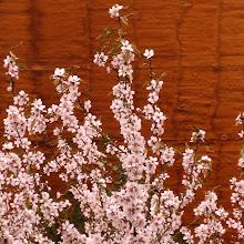Primavera 2009