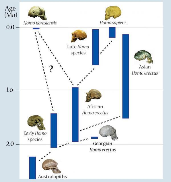 human influence on species evolution Was hitler influenced by darwinisma response to robert richardsby he fails to note that in this same passage hitler clearly stated his belief in the evolution of other species of animals and plants my book is chock-full of evidence that hitler believed in human evolution.