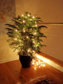 oh little christmas tree - Little Christmas Tree