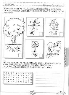 Algumas Atividades Sobre As Plantas
