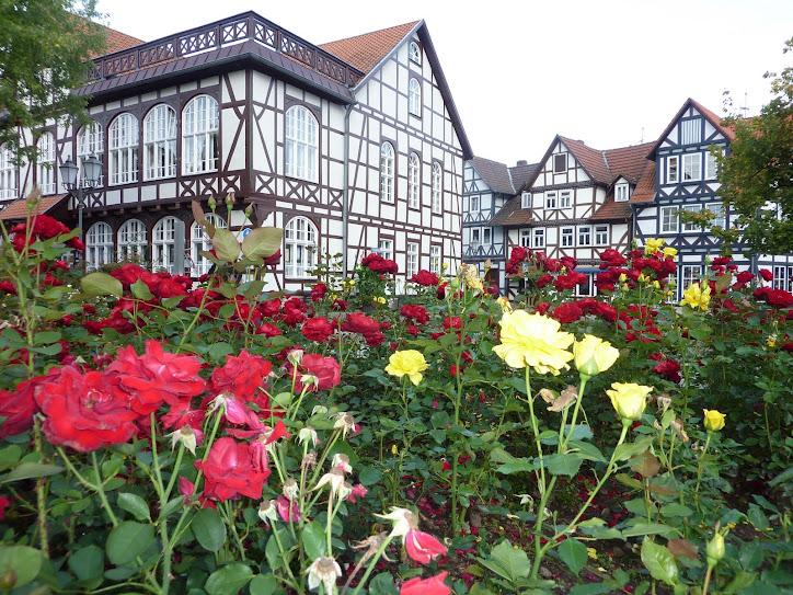 um jardim de flores a DONA LIBIA que faz aniversario Hoje, 04.11