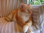 Mi gato Lucas ...