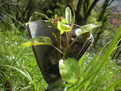I sogni di harlock gli innesti for Innesti piante