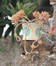 comoloca