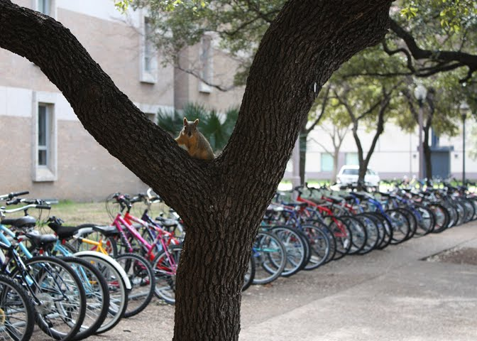 Squirrel & Bikes at Jester Dorm