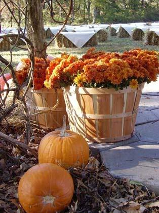 Lovely Fall wedding reception ideas