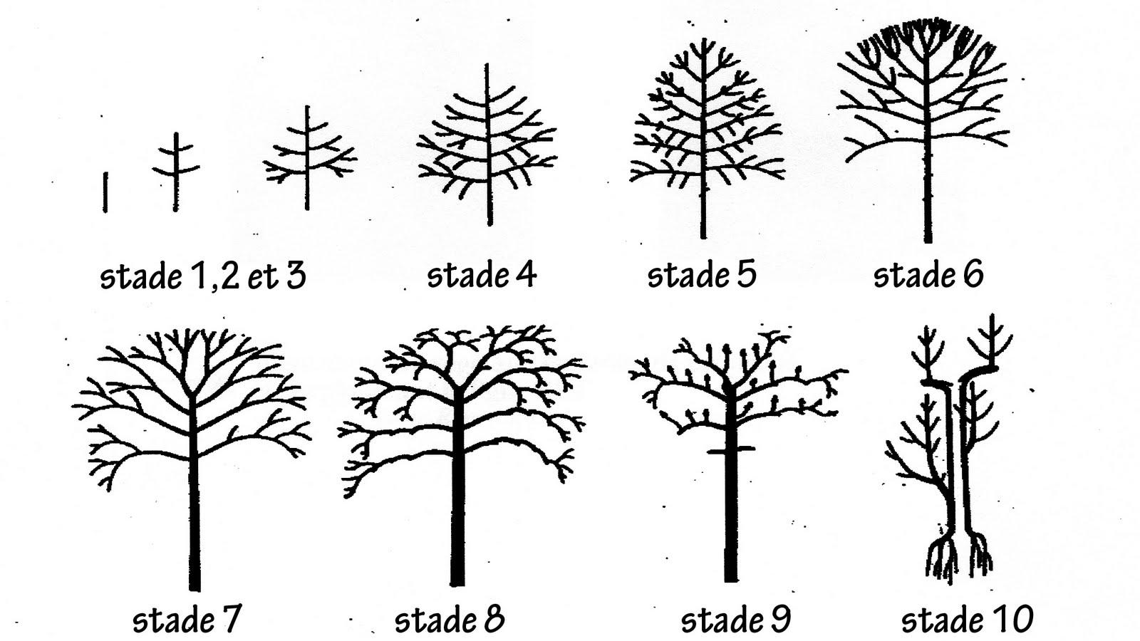 Groupe de développement d'arbres