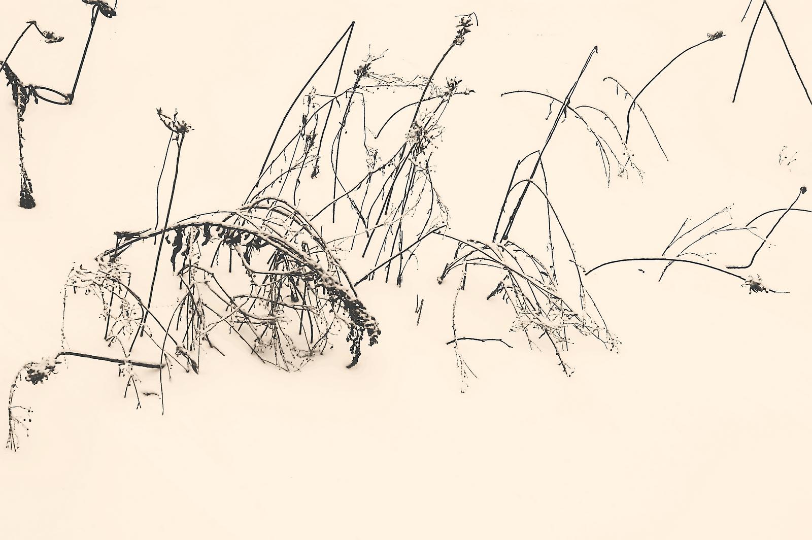 [Zen-Snow]