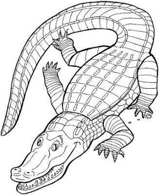 Dibujo casi real de un cocodrilo para colorear o pintar