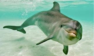 Delfín dentro del agua