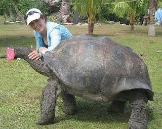 Foto de una tortuga enorme o gigante