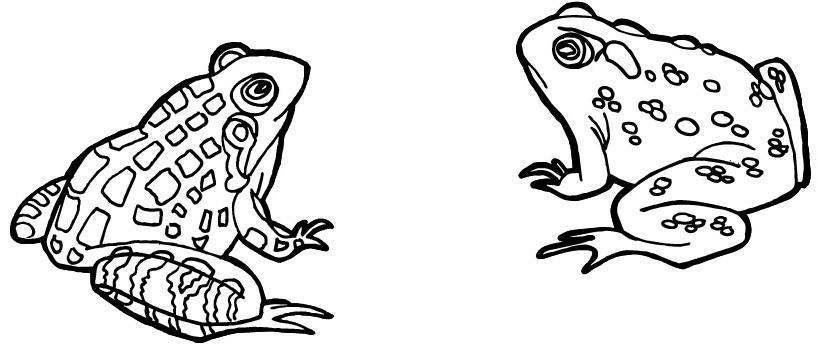 Dibujos de anfibios para colorear - Imagui