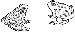 Dibujos de ranas para colorear o pintar