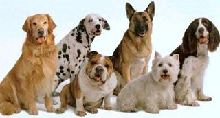 Foto de perros