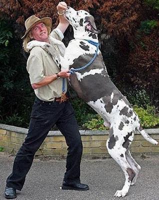 Perro enorme parándose con su dueño