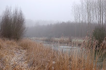 Winter in de Dordtse Biesbosch