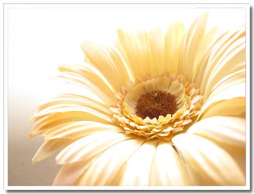 Blomma naturell