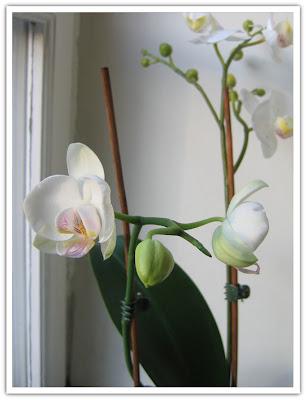 Orkidé mer utslagen